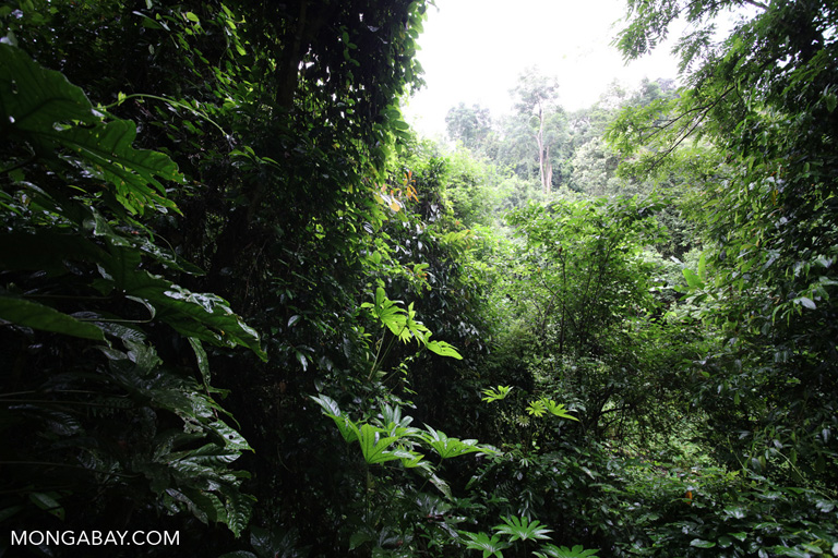 Rainforest in China