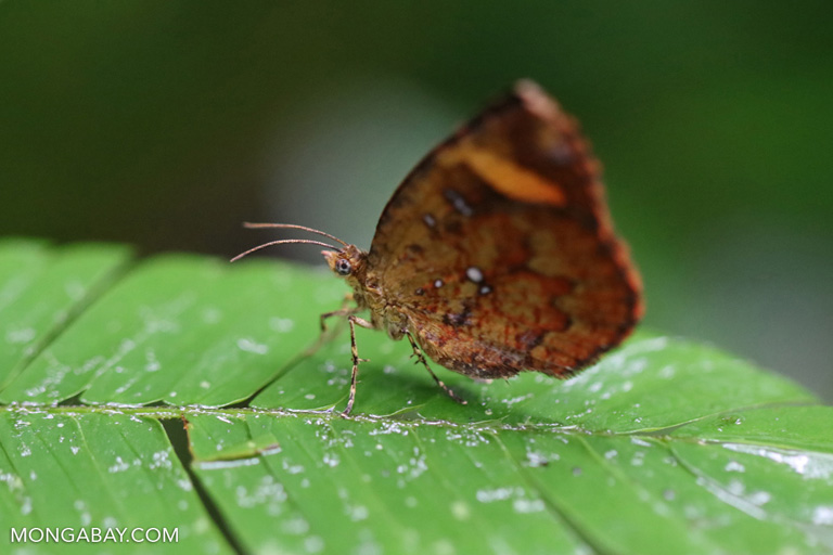Orange butterfly in China