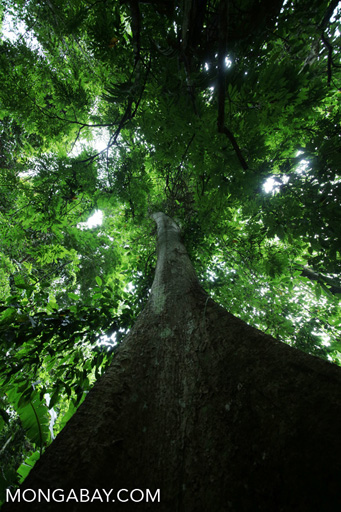 Rainforest canopy tree in China