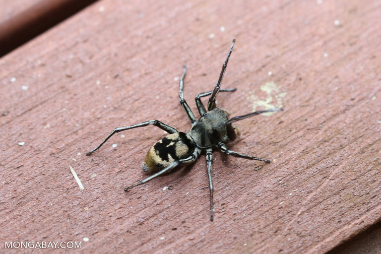 Spider in China