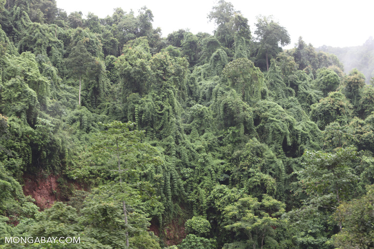 Rainforest in Southern China