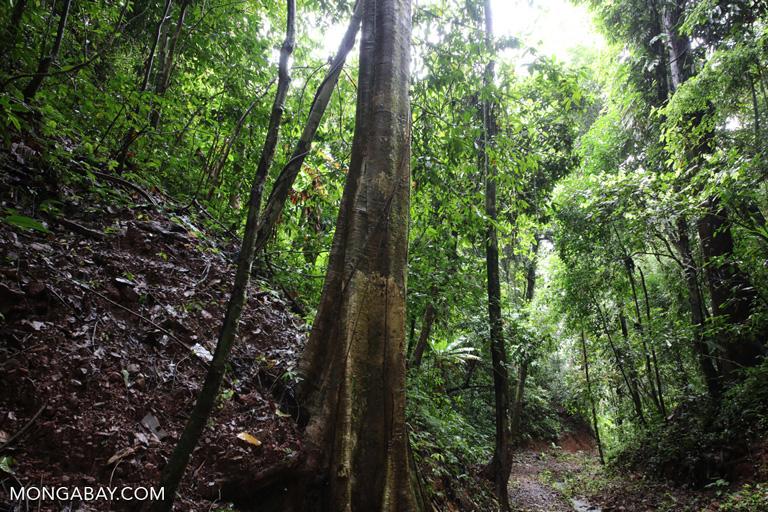 Chinese seasonal rainforest