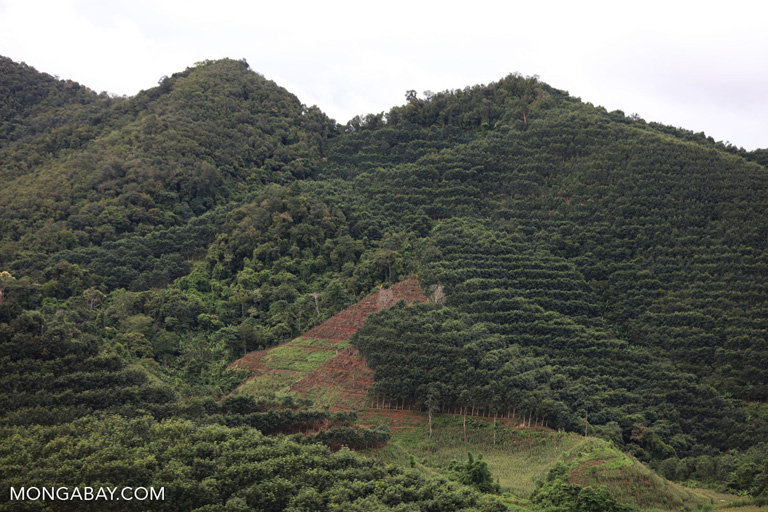 Rubber on hills in China