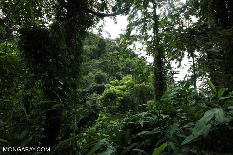 Chinese rainforest