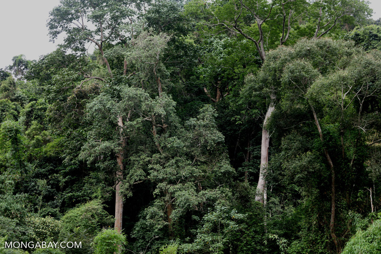 Seasonal tropical forest in China