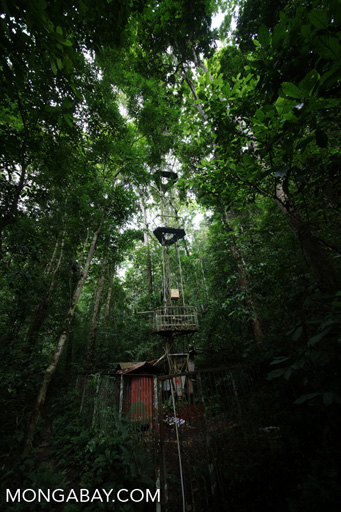 Scientific facility in the Chinese rainforest