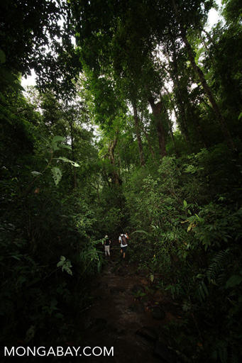 Researchers hiking in the Chinese rainforest