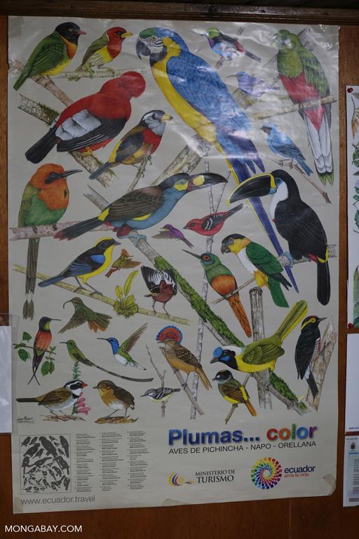 List of birds