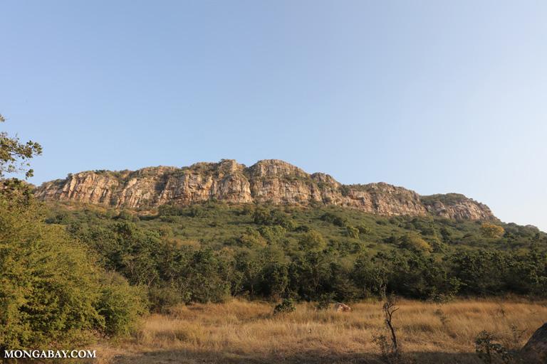 Rock face in Zone 7 in Ranthambore