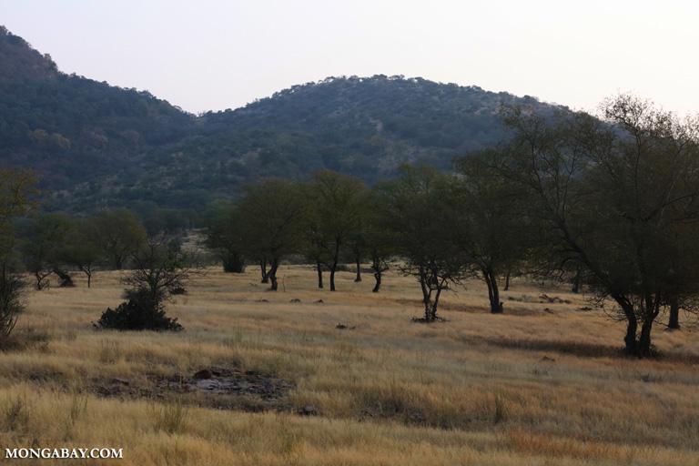 Woodland in Ranthambore
