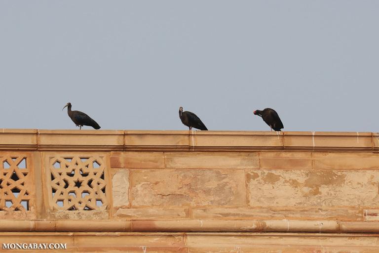 Ibis in Delhi