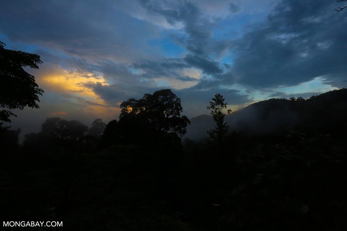 Bukit Tigapuluh rainforest
