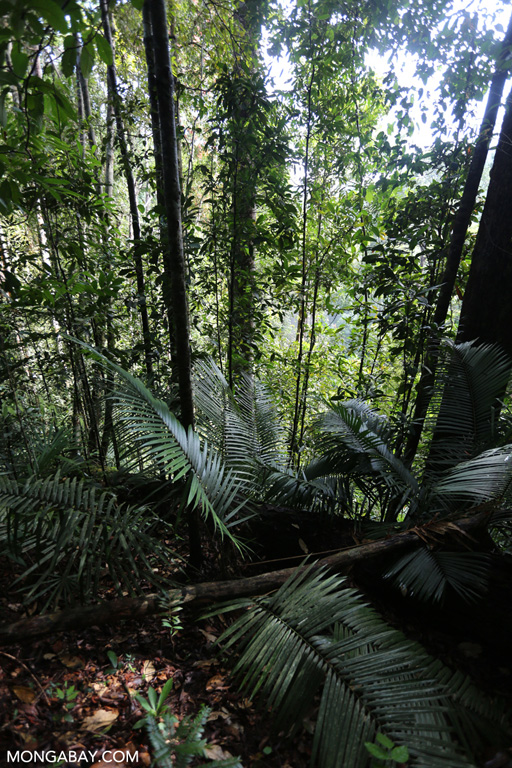 Bukit Tigapuluh rainforest