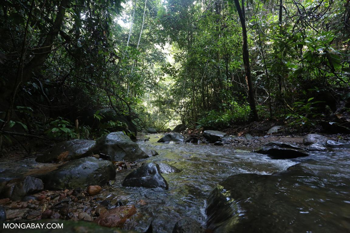 Rainforest creek in Sumatra
