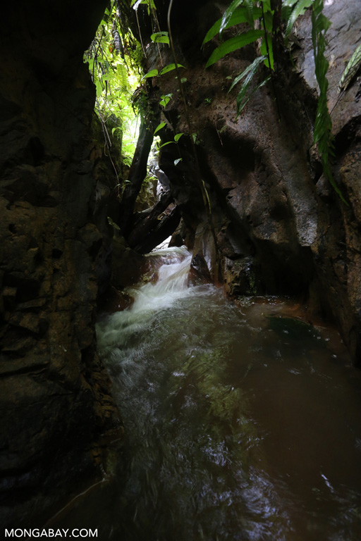 Rainforest creek in Sumatra