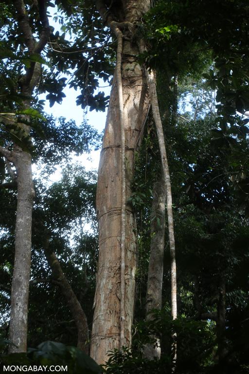 Sumatran rainforest