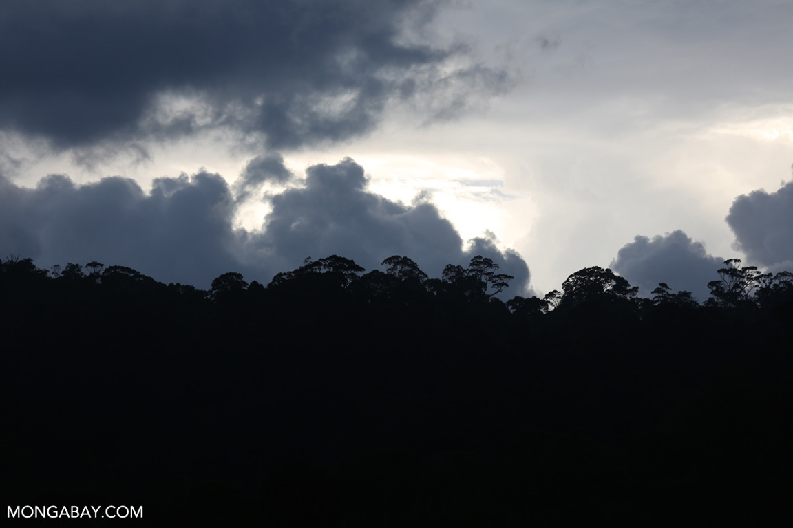 Sumatran rainforest at sunset