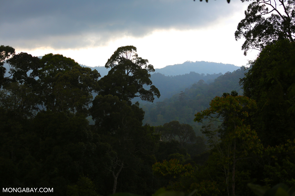 Sumatran rainforest