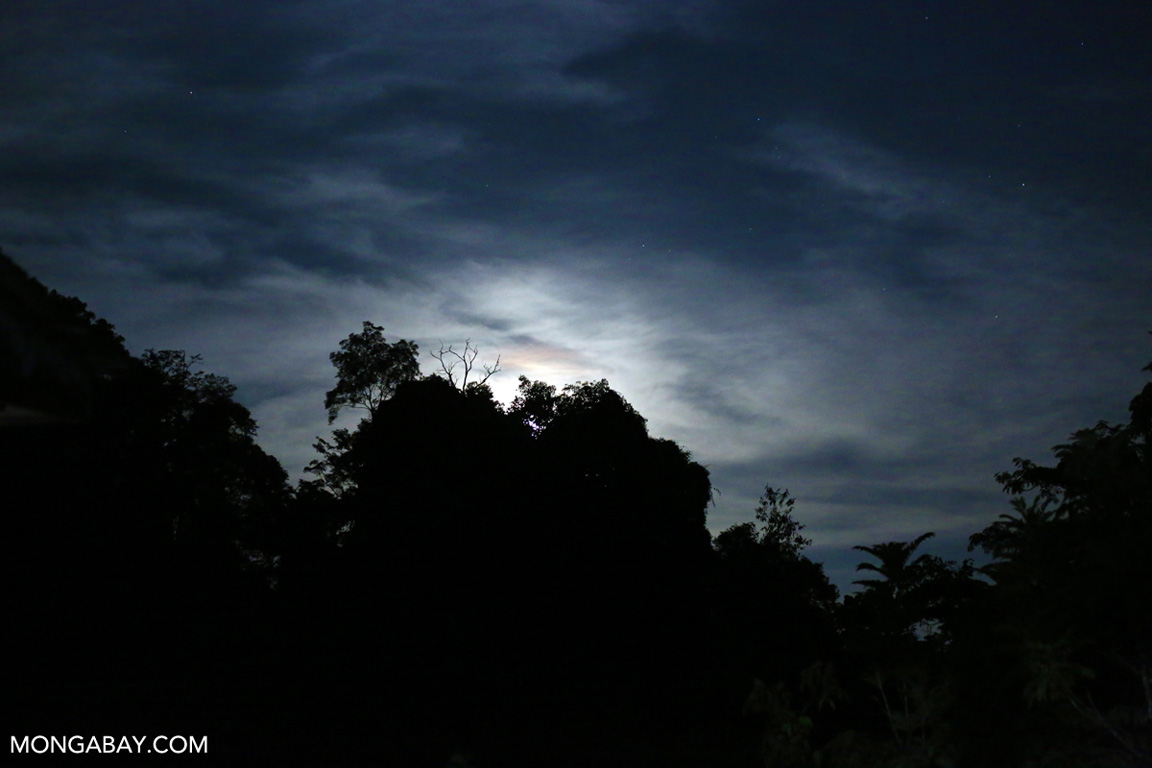 Moon rise over the rainforest