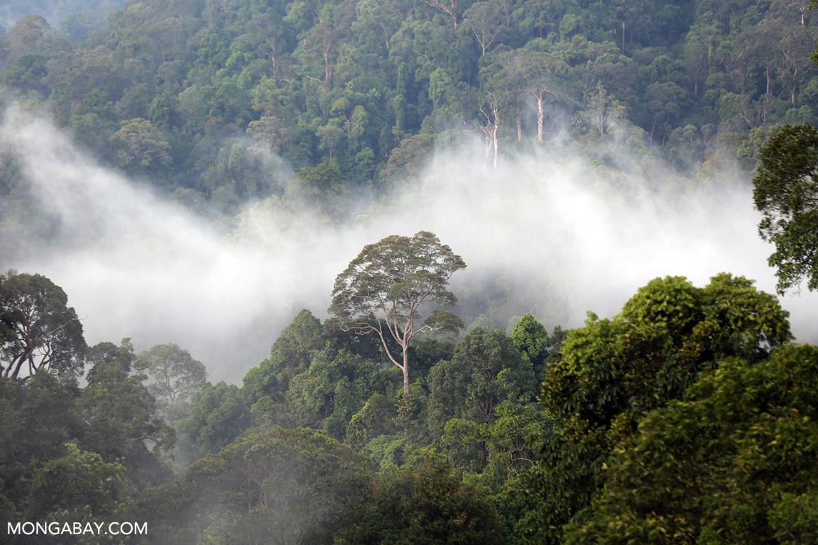Mist over the rainforest