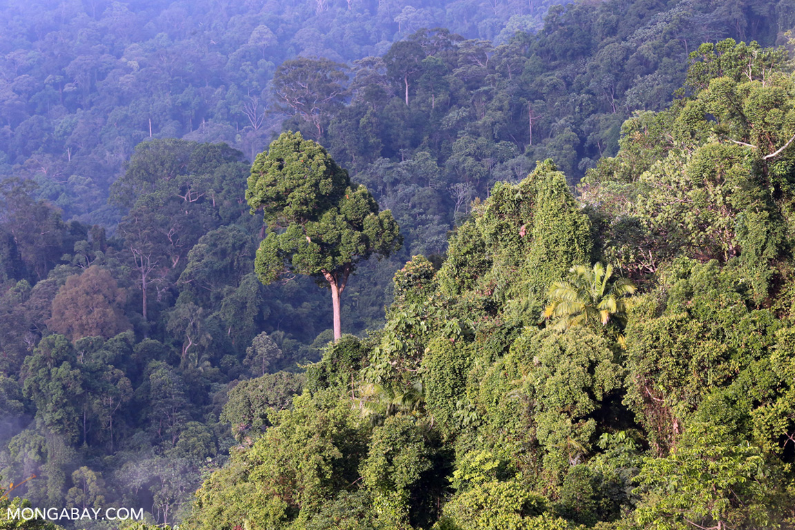 Rainforest in Sumatra. Photo by Rhett A. Butler