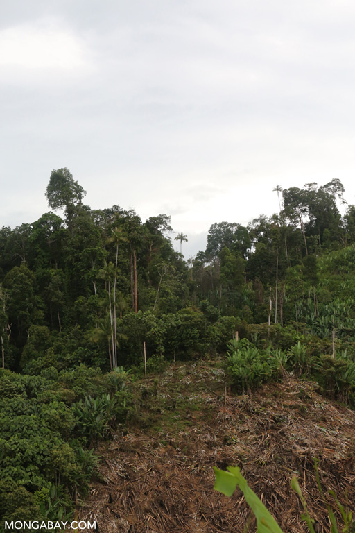 Deforestation on the edge of Bukit Tigapuluh NP