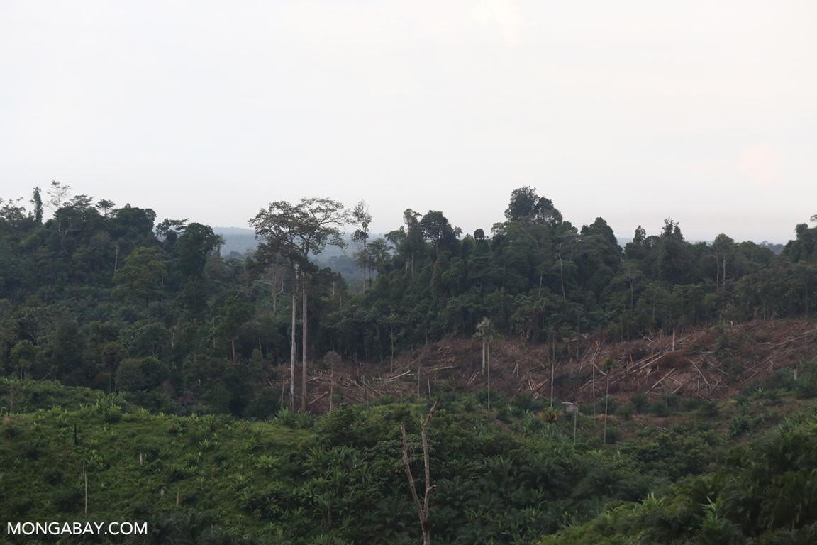 Deforestation on the edge of Bukit Tigapuluh NP