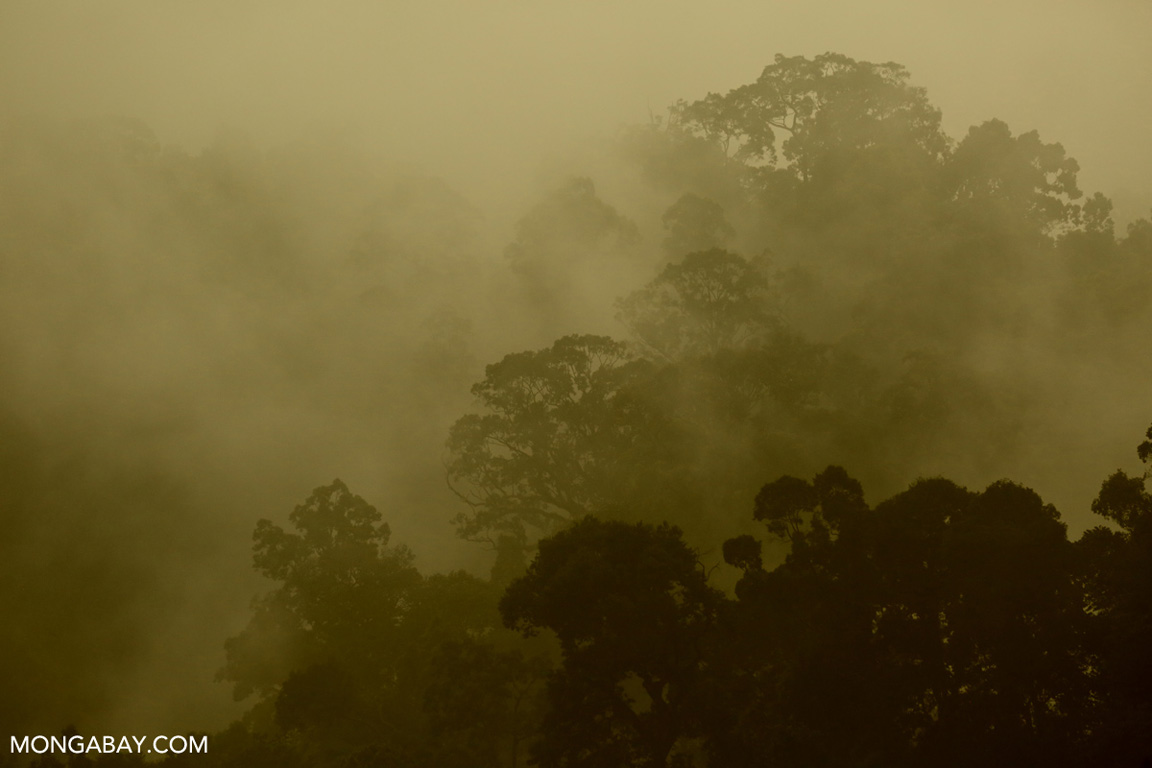 Misty rainforest in Sumatra (photo)