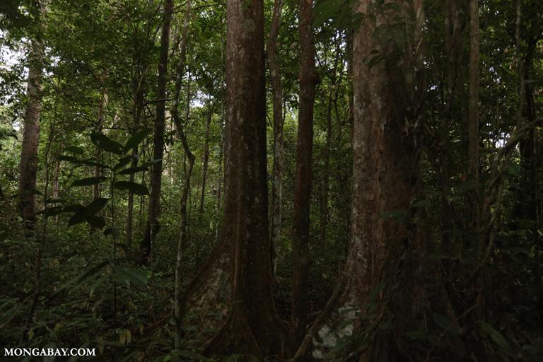 Rainforest in Way Kambas