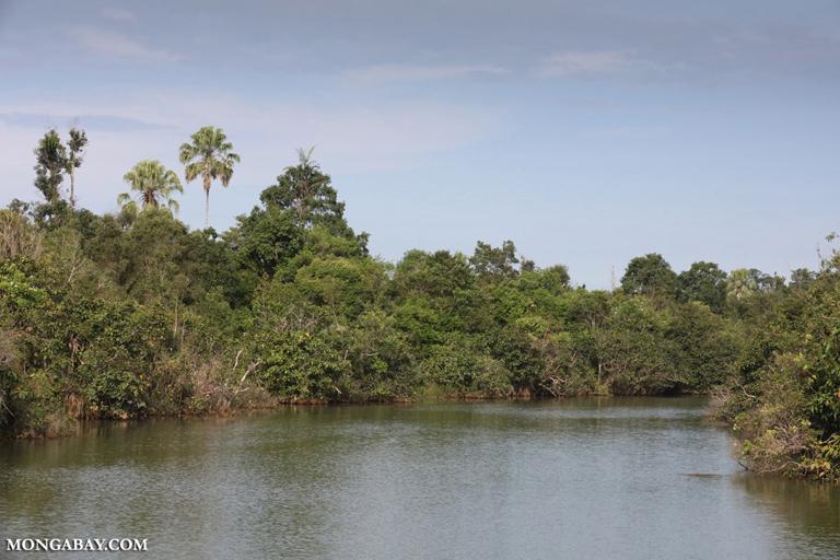 Way Kambas swamp forest