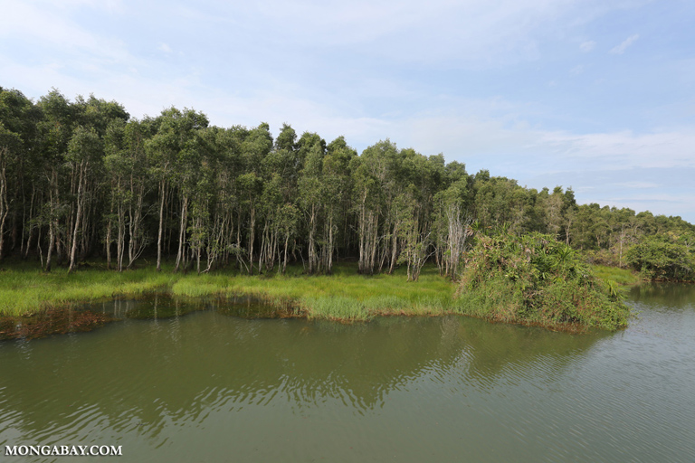 Swamp forest in Way Kambas