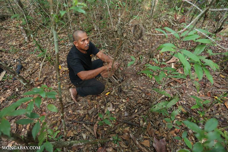Tampak jerat badak yang akan dilepaskan oleh anggota Rhino Protection Unit di Way Kambas, Lampung. Perburuan badak merupakan musuh utama dan nyata yang harus diperangi. Foto: Rhett Butler