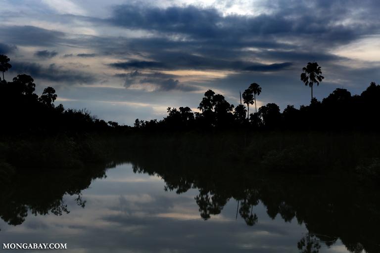 Taman Nasional Way Kambas merupakan habitat badak sumatera. Foto: Rhett Butler