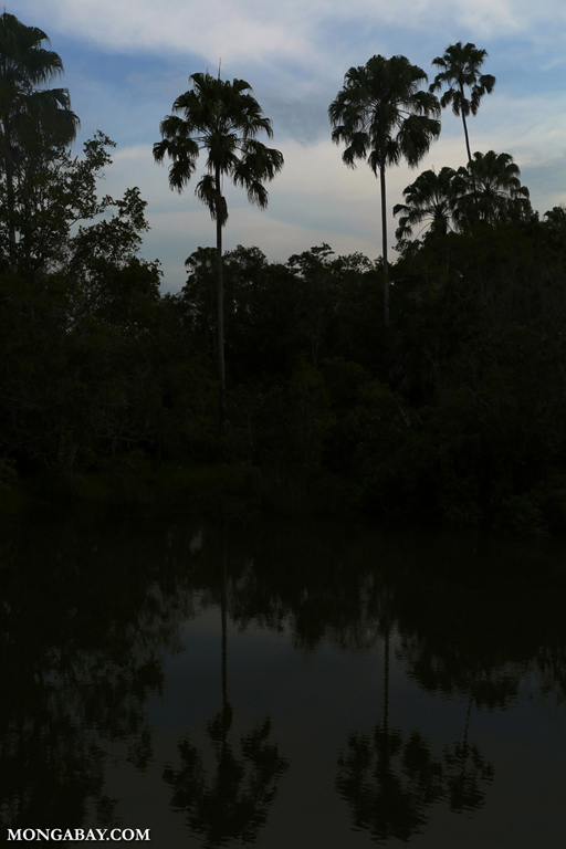 Sunset over Way Kambas swamp forest