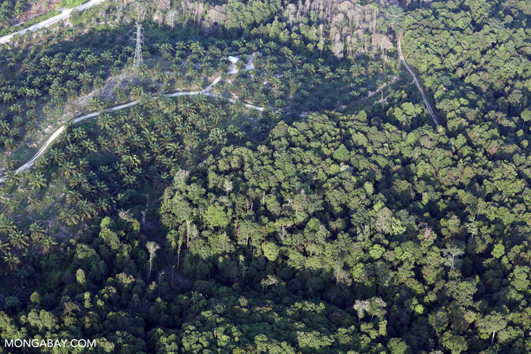 Oil palm and rainforest