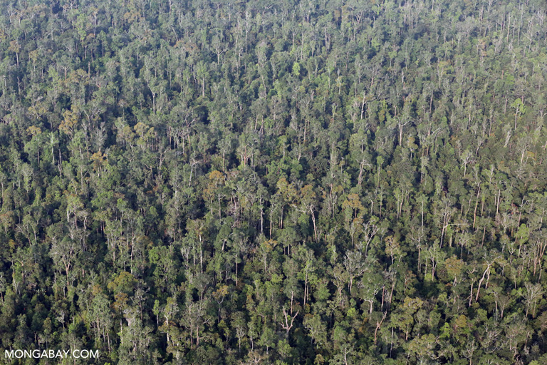 Rainforest in Sumatra