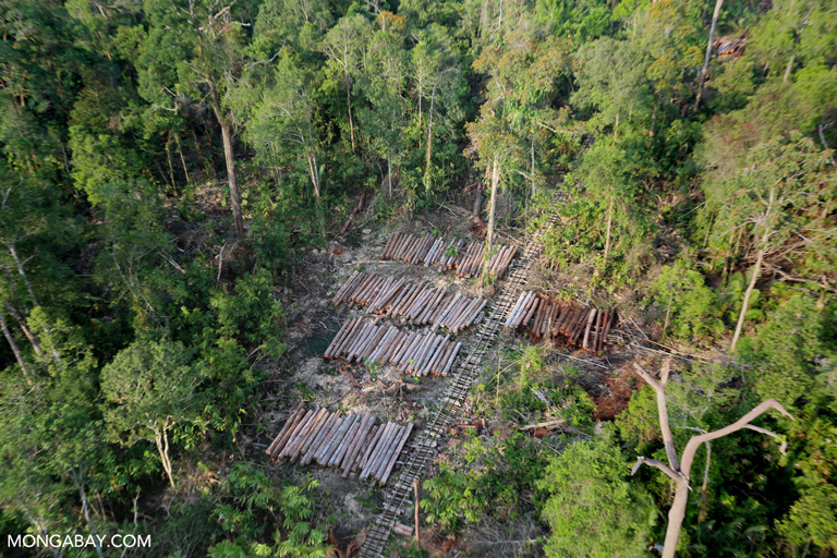 Timber cut from a lowland forest area in Riau, Sumatra. Photo by Rhett A. Butler