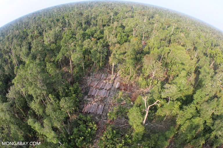 Logging concession in Riau