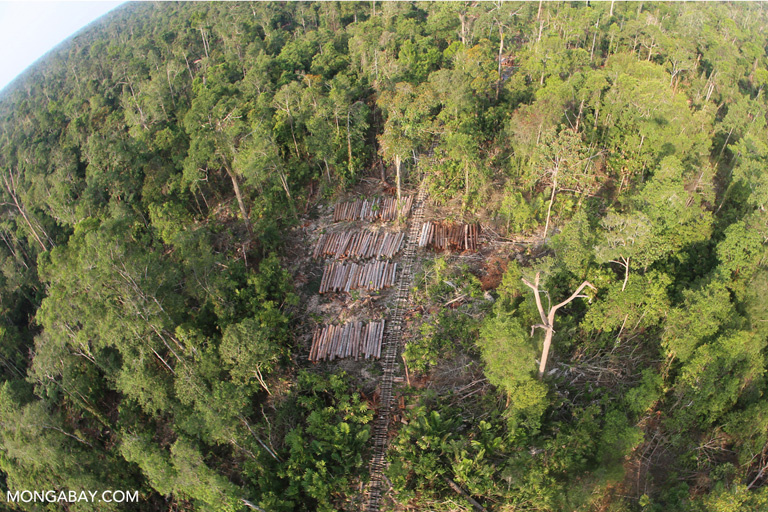 Timber extraction in Sumatra