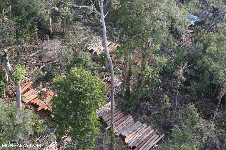 Stacks of rainforest timber in Sumatra