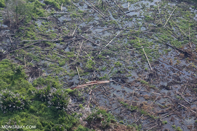 Destroyed peat forest in Riau