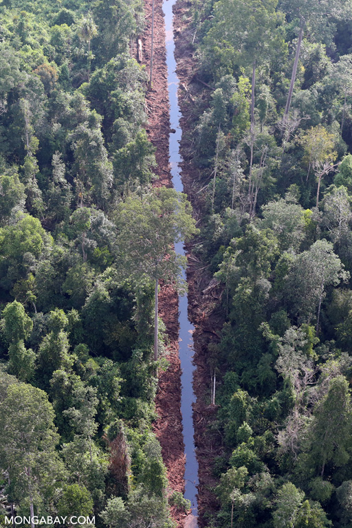 Canal dug through degraded peat forest