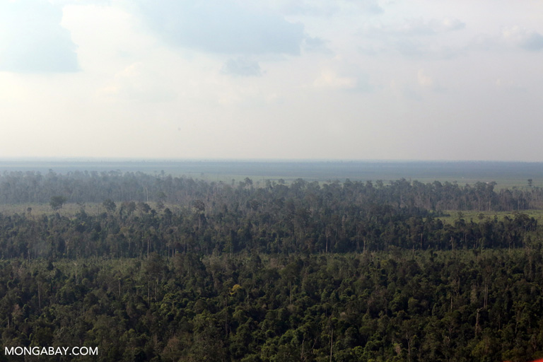 Peat forest degradation in Riau