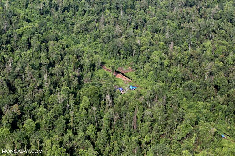 Illegal logging camp