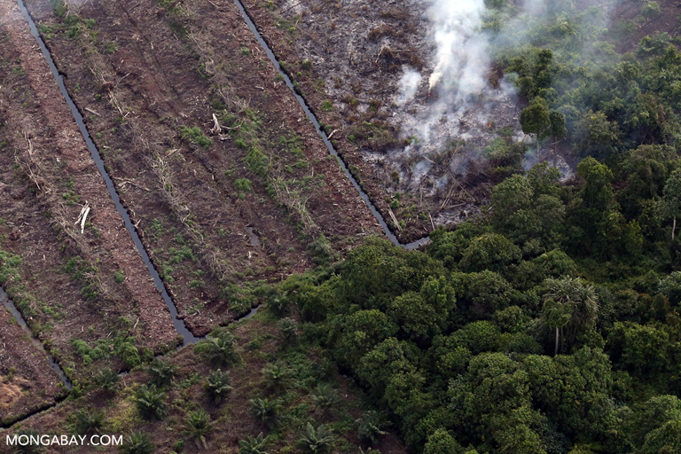 Peatland fire in Riau