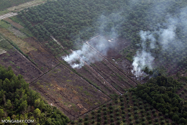 Peatland fire in Riau