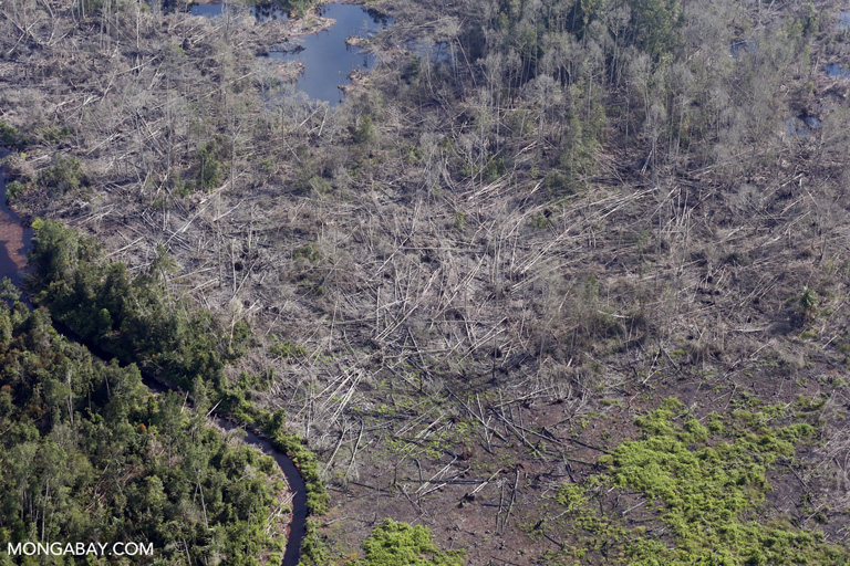 Destroyed peatlands