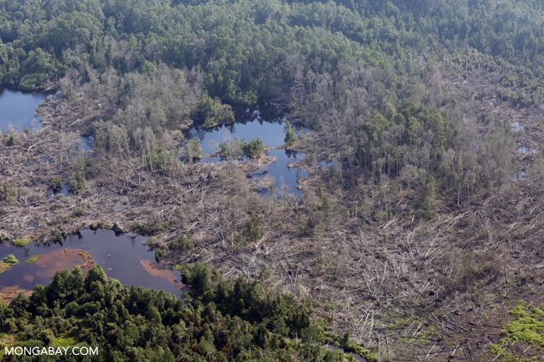 Destroyed peatlands