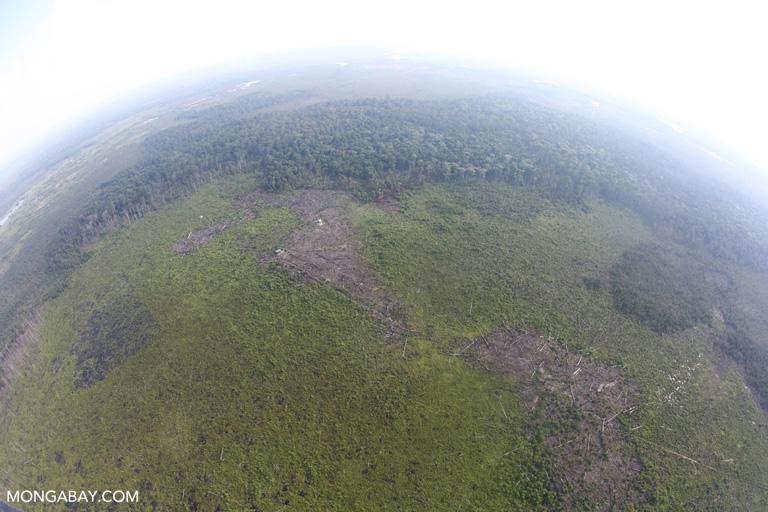 Fisheye view of cleared of peatland