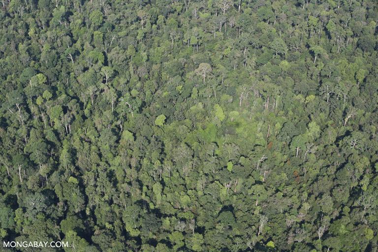 Aerial view of the Sumatran rainforest
